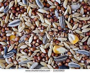 20 kg premium parrot seed Magill Campbelltown Area Preview