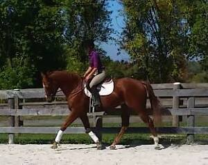 Looking for part boarder for 17 hand TB gelding near guelph