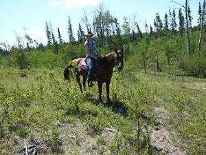 5 year old AQHA Mare - Mountain and Trail broke