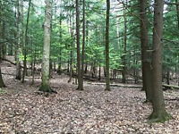 Build your dream home on 24 Acres close to weston/400