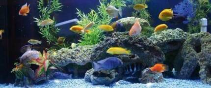 Wanted: Wanted: Wanted tropical fish to adopt
