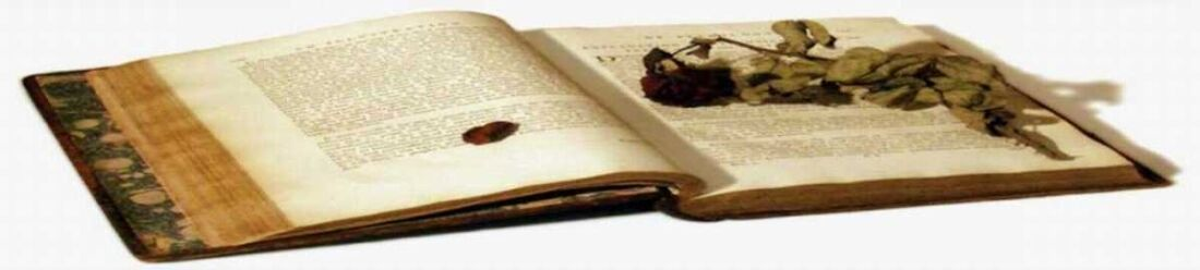 bookworm_jack