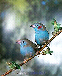 Birds Inc is doing a order if u want birds please contact asap