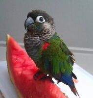 Super Friendly COnure babies with Cage and Food