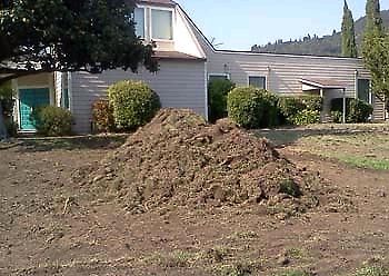 Lawn removal