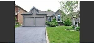 **Executive House 4+2 Beds 5Baths, Fin Base. 2 Kitchens FOR RENT