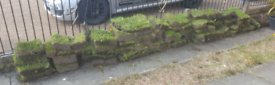 Turf for free