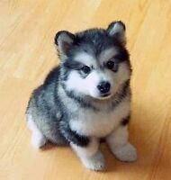 Nous désirons adoptez un chien!