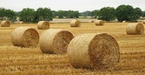 Hay for Sale, Horse quality and Cattle feed
