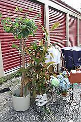 Artificial Plants And Metal Plant Stands - A