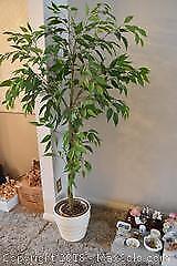 Artificial Plant A