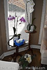 Plant Table, Side Table And Plants. A