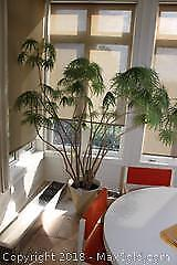 Large Living Plant - A