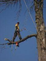 L. B. Tree Services