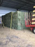 Small Square Hay Bales for sale