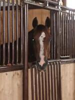 Equestrian Facility - Arena, Barn, House - for SALE or LEASE