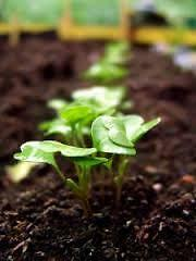ON SALE $18 SCREENED TOPSOIL, DEL INCL. ON ORD. OF 10y OR MORE