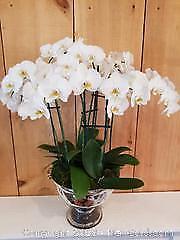 Avenue Florist 4-Orchid Centerpiece