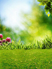 Spring Photography Backdrops and Floordrops-$50