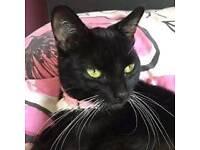 Missing cat called bella
