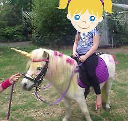 Pony at Your Party