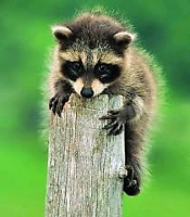 Wildlife Removal and Pest Control Services
