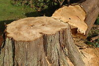 PROFESSIONAL TREE REMOVAL SERVICE MISSISSAUGA------647.533.12.12