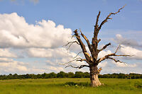 UGLY DEAD TREE OR BRANCHES? -------GOOD PRICE