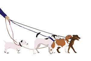 Dog Walking in Lindsay and Surrounding areas :)