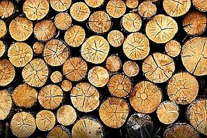 Dry Firewood. Cut August 2017. Free delivery!