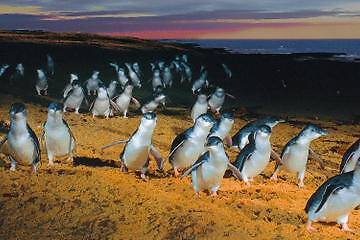 PHILLIP ISLAND HOLIDAY 27th April-14thMay $800 7night : ) BARGAIN