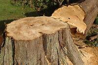 PROFESSIONAL TREE REMOVAL SERVICE BRAMPTON..........647.533.1212