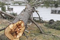 FAST.....GOOD PRICE .....TREE REMOVAL SERVICE.....647.533.1212
