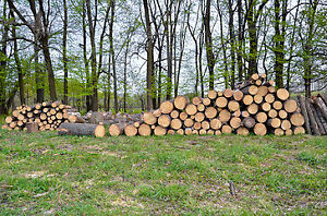 FREE SPRUCE & PINE READY FOR PICK-UP in NOBLETON