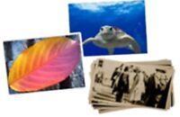 Convert Print/Developed Photos to Digital