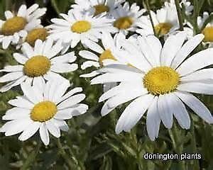 donington plants