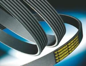 VW NEW V-Ribbed Belts Driven Continental 7DPK 2569