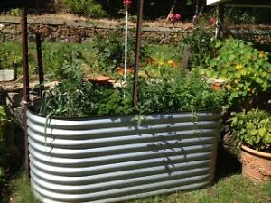 small lawn vegetables to develop
