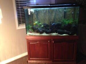 130 GAL AQUARIUM, REAL OAK WOOD STAND & HOOD + EVERYTHING ELSE