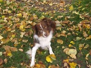 My dog Molson