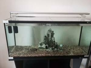 Fish Tank + Stand + Extras Earlwood Canterbury Area Preview