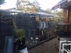 Adopting unwanted or excess birds. Werribee Wyndham Area Preview