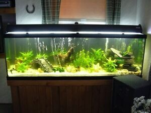 Everything for a perfect aquarium Fish tank