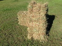 Premium Horse Hay Square Bale - DRY and GREEN – Sherwood Park