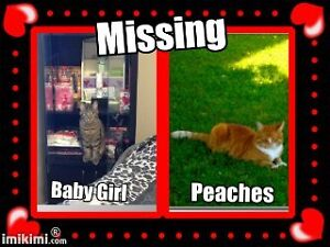 Two Missing tabby cats