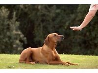 Dog Behaviourist & Owner Training + Dog Walker - £20-£15