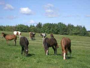 Horse Farm, indoor, 25 acres pasture, private, Bridgewater