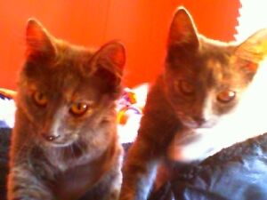 Two Cats In Need Of Loving Home