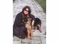 Puppy and Dog Training & 1 to1 Consultation
