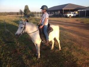 Kids Pony For Sale Chinchilla Dalby Area Preview
